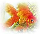 домашние аквариумы уход за рыбками