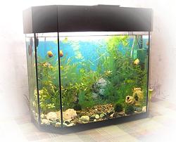 настольный аквариум