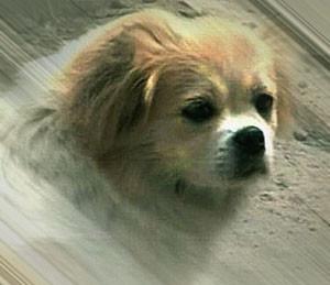 рассказы о собаках
