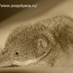Как мелкие зверьки выживают зимой в лесу?