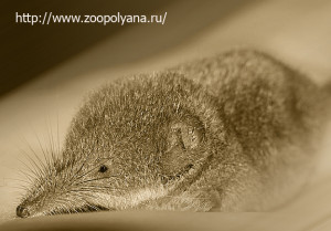 Странные животные мира