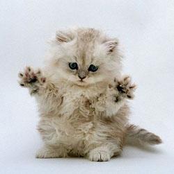 кошки чувстуют