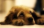 история собак
