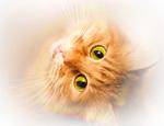 История происхождения домашних кошек
