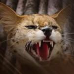 Африканская дикая кошка Сервал