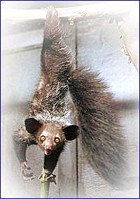 остров мадагаскар животные