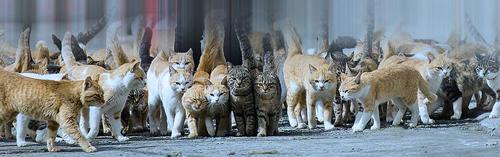 Остров_кошек_в_Японии
