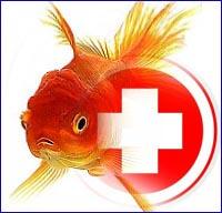 Аквариумные рыбки профилактика карантин