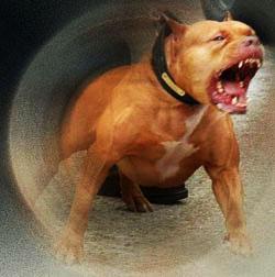 Самые опасные породы собак