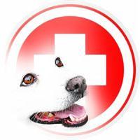 болезнь собак чумка