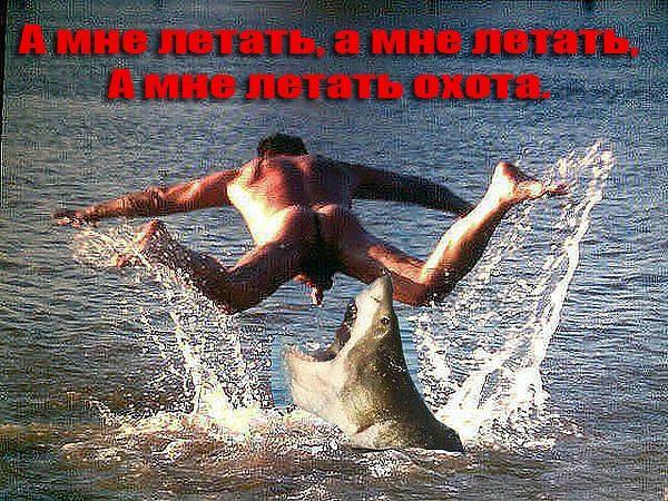 демотиваторы акула