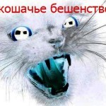 koshach'e_beshenstvo