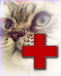 признаки-заболевания-у-кошки
