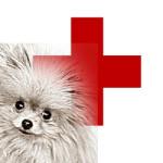Как сделать укол собаке внутримышечно