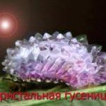 Кристальная гусеница