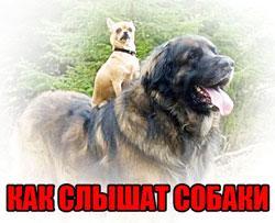 как слышат собаки.