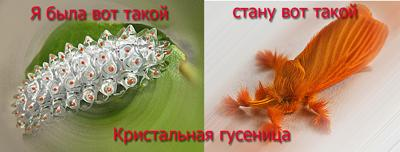 хрустальная гусеница
