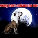 Почему воет собака по ночам.