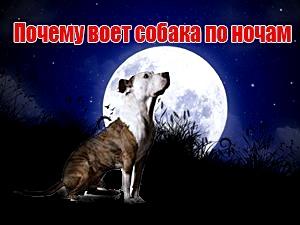 почему воет собака по ночам