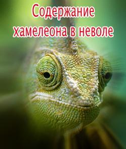 содержание хамелеона