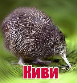 Нюхающая птица