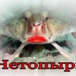 Рыба нетопырь.(лат. Ogcocephalus)