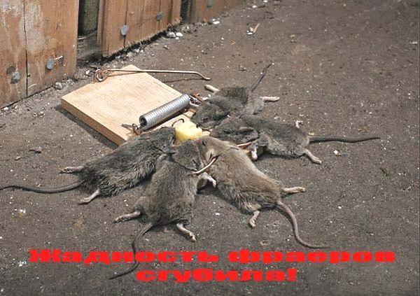 смешные демотиваторы с животными