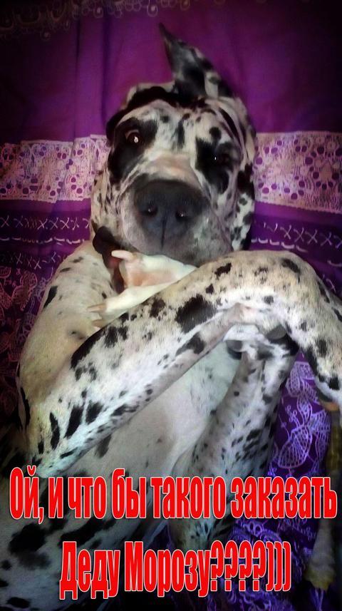 Самая красивая собачка Элька поздрвляет всех с Наступающим Новым годом!