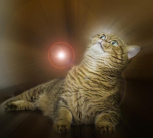 4 место. Экзотическая кошка.