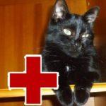 Опасные заболевания для людей от кошек