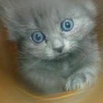 О кошках и их нравах.Тайны характера кошек.