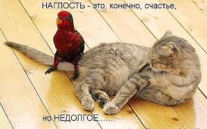 демотиваторы наглый попугай