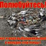 Пластиковая эпидемия