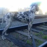 Как перевозить животных по железной дороге