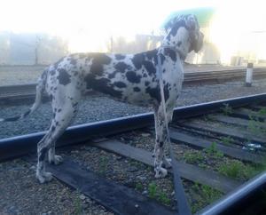 как перевозить животное по железной дороге