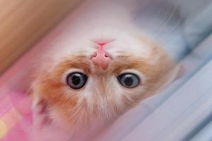 Приметы о кошках и не только