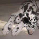 Рецепты лакомства для собак