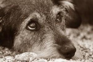 собаки экстрасенсы