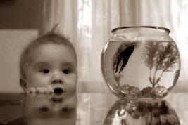 первый аквариум в доме