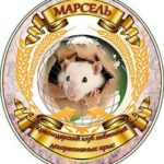 Клуб любителей декоративных крыс