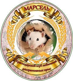 Клуб-декоративных-крыс