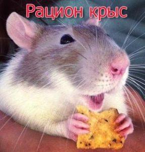 Рацион крыс