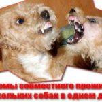 Проблемы совместного проживания нескольких собак в одном доме.