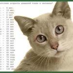 Соответствие домашней кошки возрасту человека.