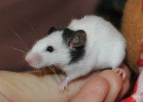 выставка крыс