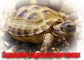 Содержание среднеазиатских черепах