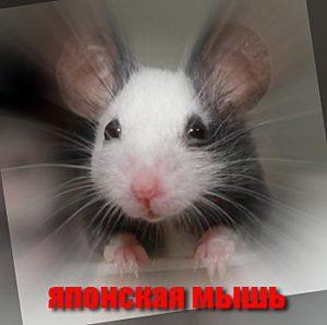декоративные мыши фото