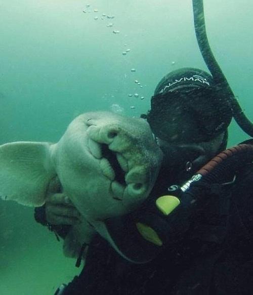 Акула хочет ласки