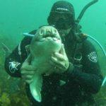 Ласковая акула