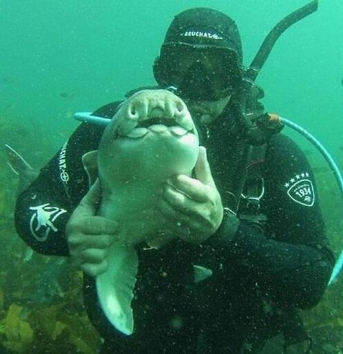 Акула полюбила дайвера
